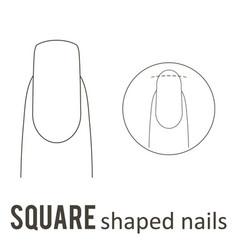 Nail shape square vector