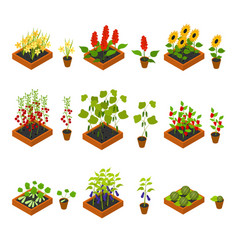 plant seedling and elements set isometric view vector image