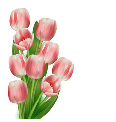 realistic tulips bouquet vector image