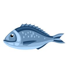 Dorada fish isolated of seafood on vector