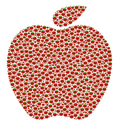 apple composition of tomato vector image
