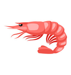Cooked tiger shrimp isolated of vector