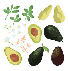 summer set with avocado leaves and flowers vector image