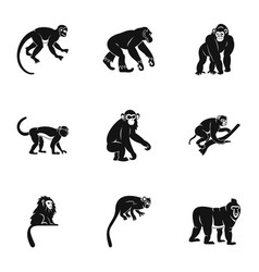 tropical monkey icon set simple style vector image