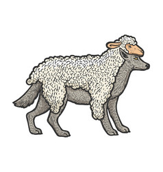 wolf in sheeps clothing sketch vector image