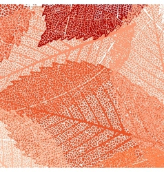 Dry autumn leaves template vector image vector image