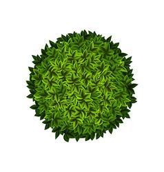 Round green bush vector image vector image