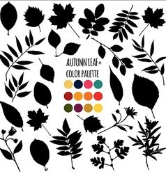 Autumn leaf collection vector image