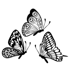 Black and white butterfly isolated on white vector