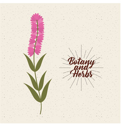 Botany and herbs design vector