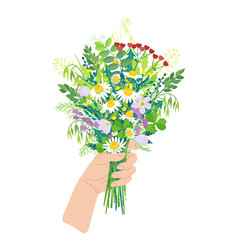 female hand holding wild flowers vector image