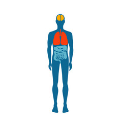 Human body infographic man vector