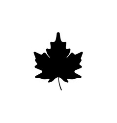 maple leaf icon black on white background vector image