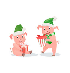 new year pigs with gift boxes in hat and scarf vector image