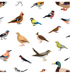 seamless pattern with wild forest birds on white vector image