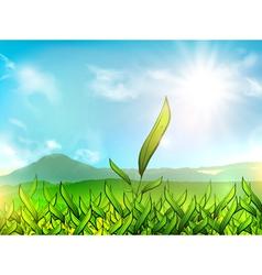 Tea Plantation vector image vector image