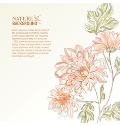 Branch chrysanthemum vector