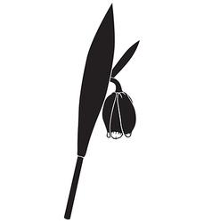 Fritillaria vector