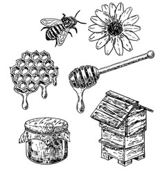 Ink hand drawn sketch style honey set vector