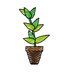 Matera plants inside vector
