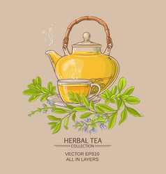 sage tea vector image