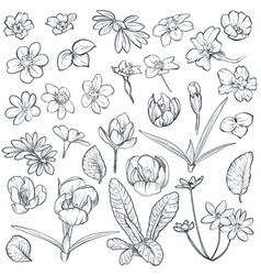 set of hand drawn spring flowers and leaves vector image