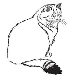 cat contour vector image