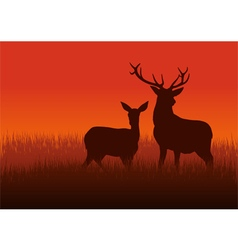 Deer and Doe vector image