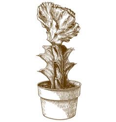 Engraving gymnocalycium in pot vector