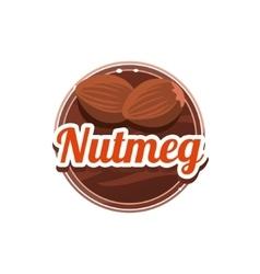 Nutmeg Spice vector image
