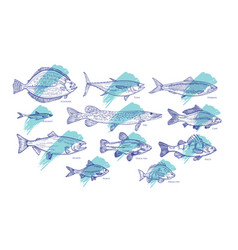 Set fish hand drawn with contour lines against vector