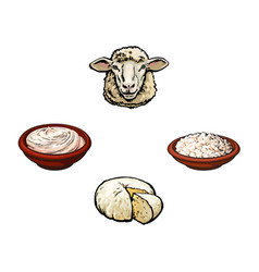 sketch sheep head cottage cheese sour cream vector image vector image