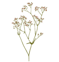 hand drawn gypsophila branch vector image