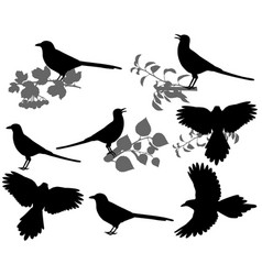 magpie silhouette vector image
