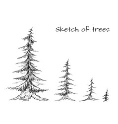 pencil sketch of trees of different sizes element vector image