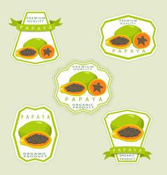 the theme papaya vector image