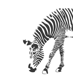 Zebra in black and white silhouette vector image