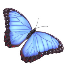 blue morpho butterfly vector image vector image
