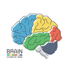 Brain anatomy with flat color design and outline vector