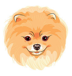Cute dog pomeranian vector