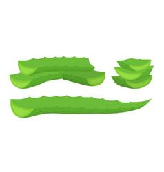 aloe vera slices cartoon flat style vector image vector image