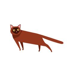 burmese cat breed flat funny vector image