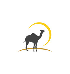 camel icon logo template design vector image