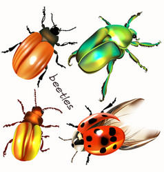 collection of realistic colorful beetles vector image