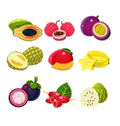 Colourful Exotic Tropical Fruits Set vector