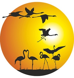 Flamingos and sunset in the ring vector