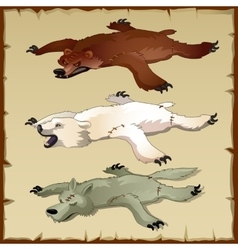 Skins set of forest animals bears and wolf vector image