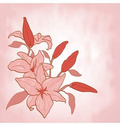 Flower lily Invitation or greeting card vector image