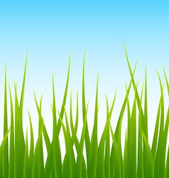 green grass blue sky seamless background vector image