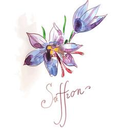 Saffron flower of blue color vector